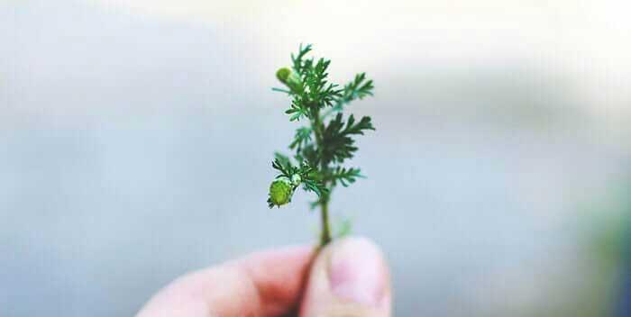 Hand mit Pflanze